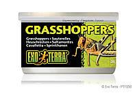Консервированный корм ExoTerra для рептилий, кузнечики мелкие, 34 гр