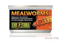 ExoTerra Консервированный корм, мучные черви