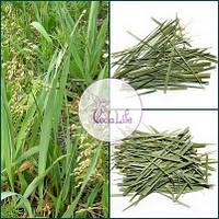 Зубровка трава, 10 грамм - приготовление настоек, улучшение кровообращения, фото 1