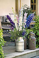 Дельфиниум крупноцветковый Пасифик Микс / Delphinium hybrids Pacific Mix