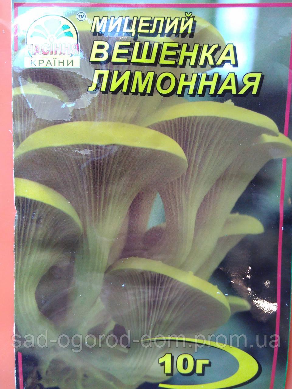 Мицелий Вешенки Лимонной