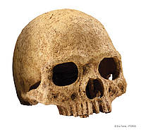 Декорация Exo Terra Primate Skull для террариума, череп человека