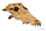 Декорация Exo Terra Crocodile Skull для террариума, череп крокодила