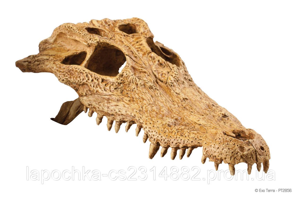 Декорация Exo Terra Crocodile Skull для террариума, череп крокодила - Лапочка интернет-магазин зоотоваров в Харькове