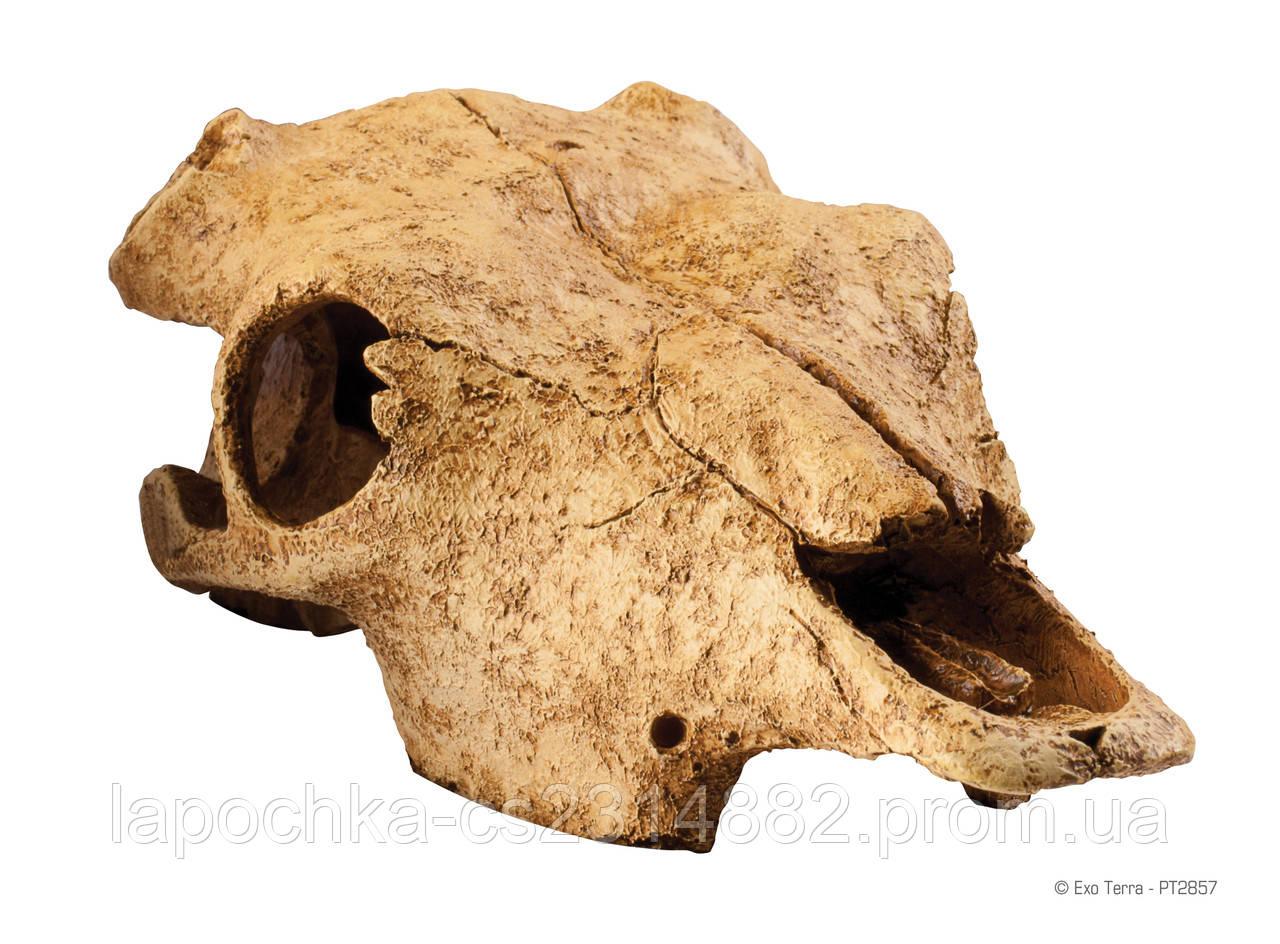 Декорация Exo Terra Buffalo Skull для террариума, череп буйвола - Лапочка интернет-магазин зоотоваров в Харькове
