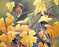 Алмазная выкладка Две птицы на лозе винограда KLN 30 х 38 см (арт. FR096)