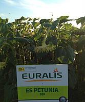 Семена подсолнуха Евралис ЕС Петуния, фото 1