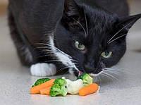 Нужны ли котам витамины?