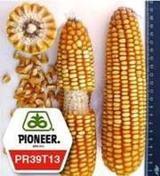Семена кукурузы PR39T13 (ПР39Т13)