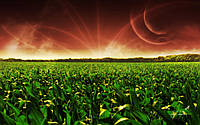 Семена кукурузы G Host GS 105 M25 (Джи Хост)
