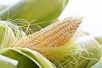 Семена кукурузы Монсанто ДКС 2960, фото 1