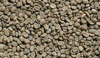 Зеленый Кофе Робуста  blu Dracon scr 18 (Вьетнам) мытый - Кофе оптом (опт) CoffeeOpt