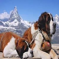 Групповые туры в Швейцарию