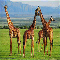 20 причин посетить континентальную Танзанию и остров ЗАНЗИБАР