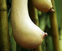 10 шт. / комплект семена -  Грудь