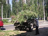 Спил вырубка деревьев и кустов