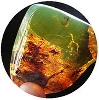 Особенности янтаря зеленого цвета