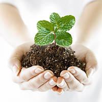 Декстрел (кг.)(Декстрил, Дикстрил,Декстрилл) Дозреватель томаты, картофель, лук.Регулятор роста растений