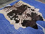 Незвичайна шкура корови зебра чорно білому тлі плямистому, фото 3