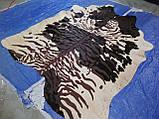Незвичайна шкура корови зебра чорно білому тлі плямистому, фото 5