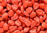 Семена кукурузы Солонянский 298 СВ (25 кг)