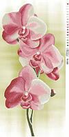 """Бисерная заготовка """"Розовые орхидеи"""" ТК-005"""