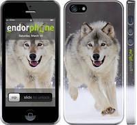 "Чехол на iPhone 5s Бегущий волк ""826c-21"""