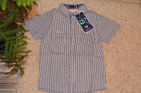 Хлопковая рубашка для мальчиков F&D 6-16 лет