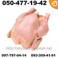 Цыплята бройлеры COBB 500 КОББ 500 ПОДРОЩЕННЫЕ (МЯСО)