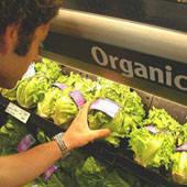 Украина может занять одно из ведущих мест среди производителей органической продукции