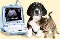 УЗИ (ультразвуковая диагностика) для животных