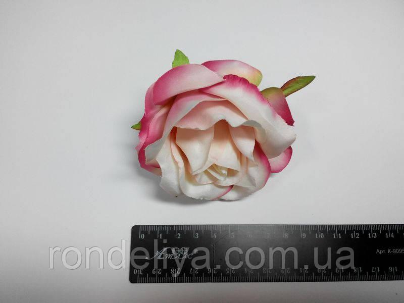 Троянда біла рожево