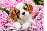 """Пазлы """"Castorland""""  180шт (018185) 32*23 см (Щенок в розовых цветах)"""