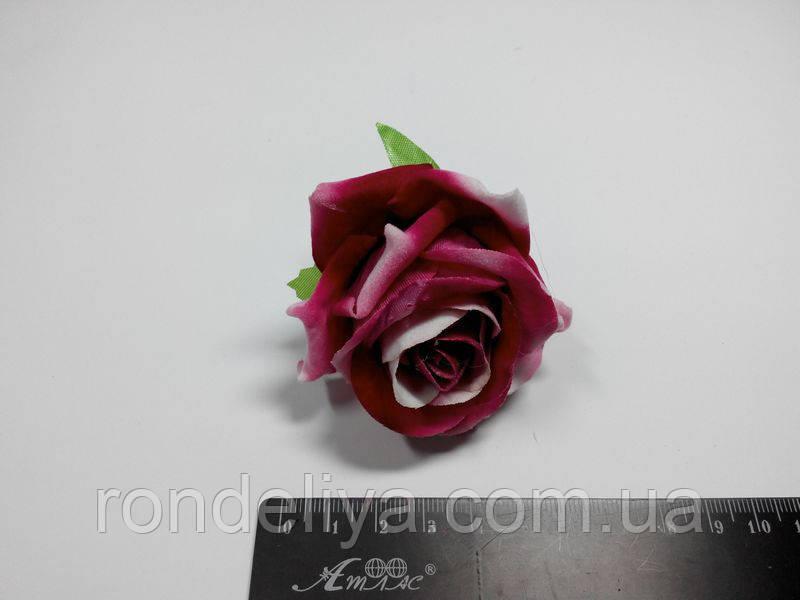 Роза темно рожева з білим