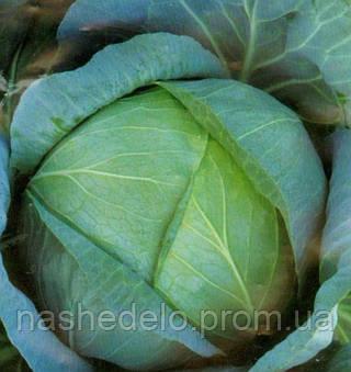 Семена капусты б/к Бирюза 500 гр. (банка) Коуел (Сатимекс)
