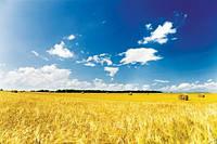 Купим сельхозпродукцию выгодно