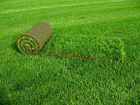 "Рулонный газон ""Парковый"", теневыносливый газон"