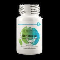 Эхинацея - стимуляция и регуляция иммунитета