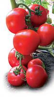 Ядвига f1 /  jadviga f1 — томат полудетерминантный, kitanoseeds 100 семян