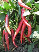 БИБО (ИМПАЛА)F1 /BIBO (IMPALA) F1 - Clause 5 грамм семян