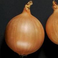 Дормо f1 / dormo f1  — лук репчатый, nickerson zwaan 250 000 семян