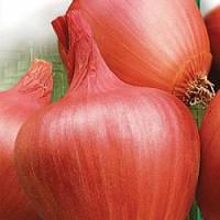 Амфора f1 / amfora f1 — лук репчатый, moravoseed 25000 семян