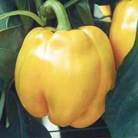 КВАДРАТО АСТИ / KVADRATO ASTI  — перец желтый, Hortus 500 грамм