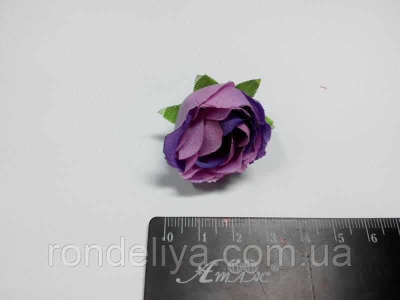 Роза маленька фіолетова