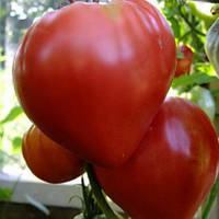 БЫЧЬЕ СЕРДЦЕ / BULLISH HEARTH   — томат детерминантный, SAIS 500 грамм