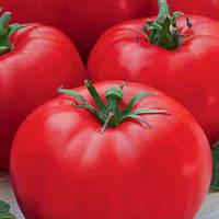 ЛЕДИ СОВЕРШЕНСТВО / LADY OF EXCELLENCE — томат детерминантный, Euroseed 10 грамм