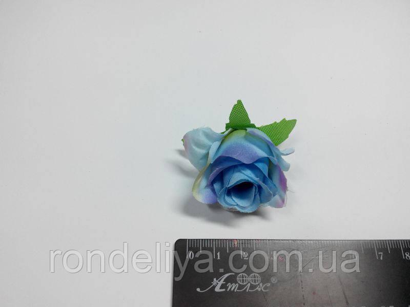 Маленька блакитна троянда з фіолетовий