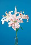 Цветы из гофрированной бумаги, фото 6