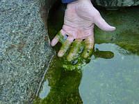 Цветение воды и слизистые водоросли - решение проблемы.