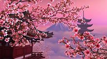 Сакура - декоративні дерева.